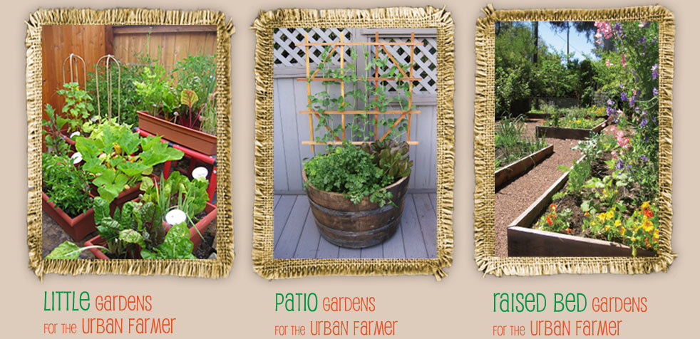 garden pictures: little container, patio and raised bed gardes